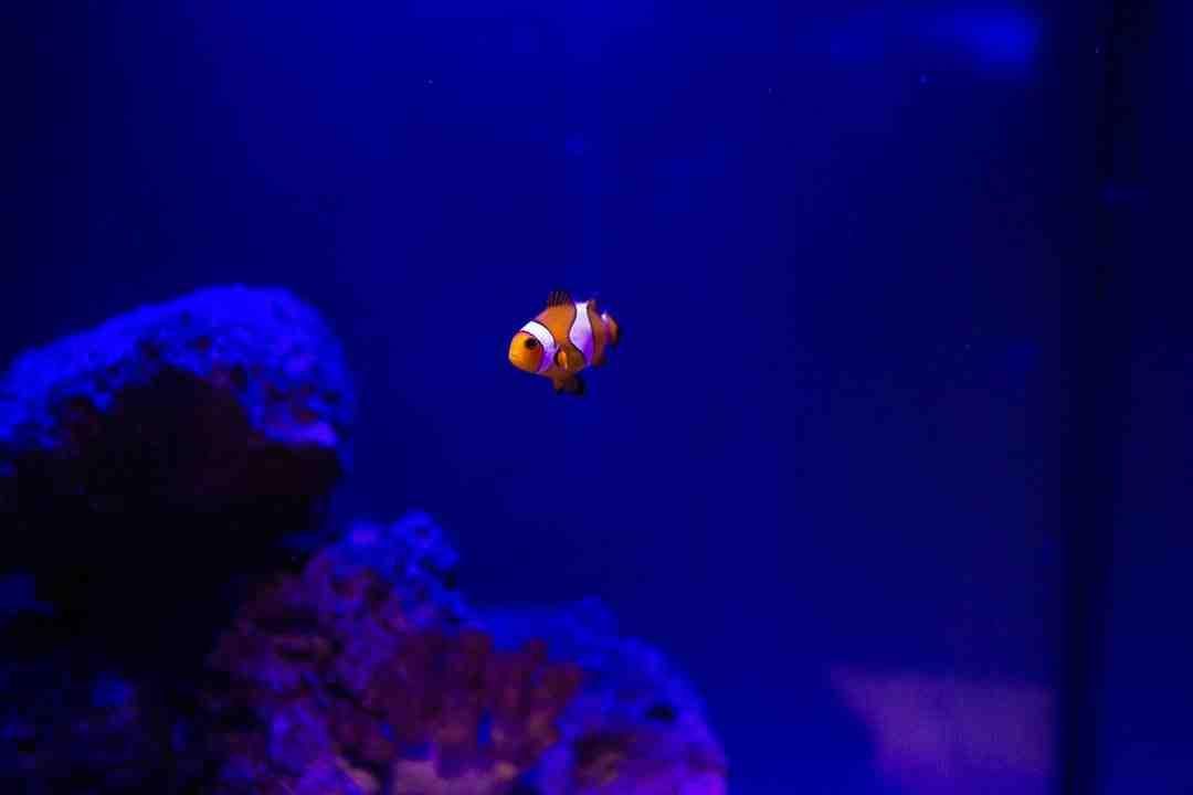 Pourquoi devez-vous allumer votre aquarium tout le temps?