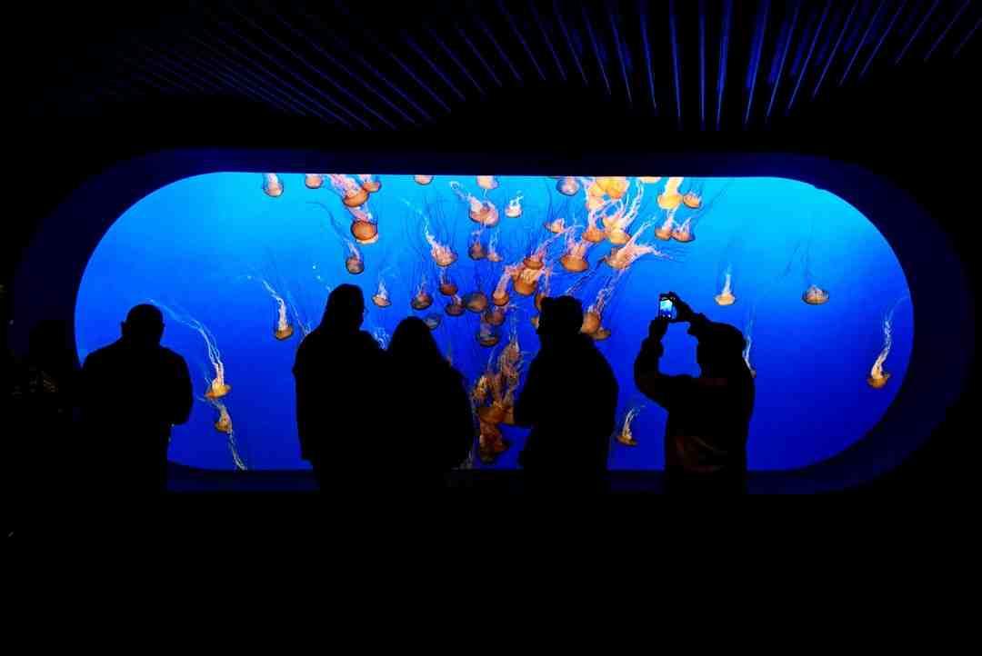 Quand l'aquarium devait être allumé