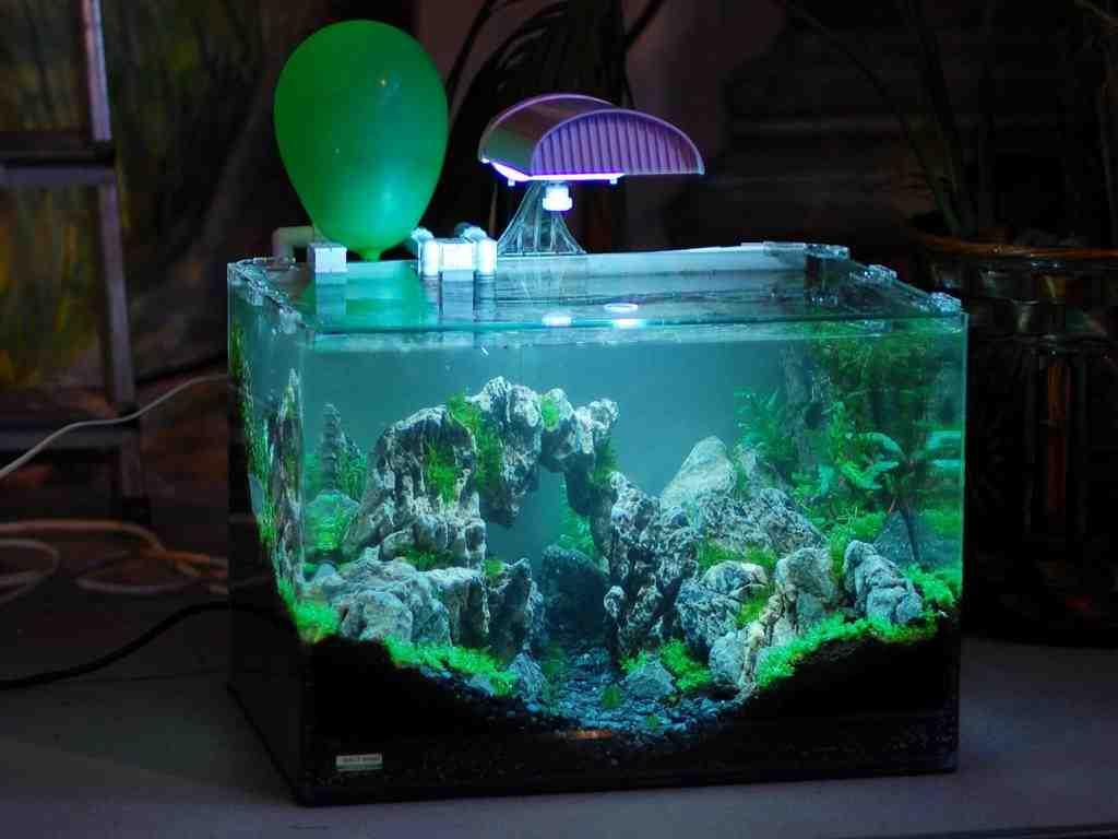 Quelle est la lumière pour un aquarium de cichlidés?