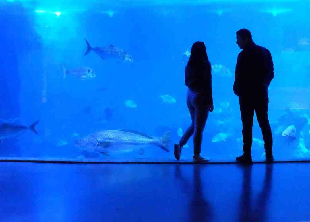 Quelle est la puissance d'éclairage de l'aquarium?