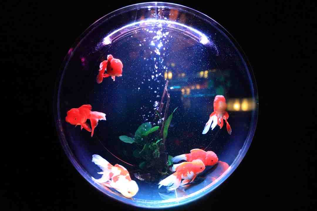 Quelle puissance d'éclairage pour l'aquarium?