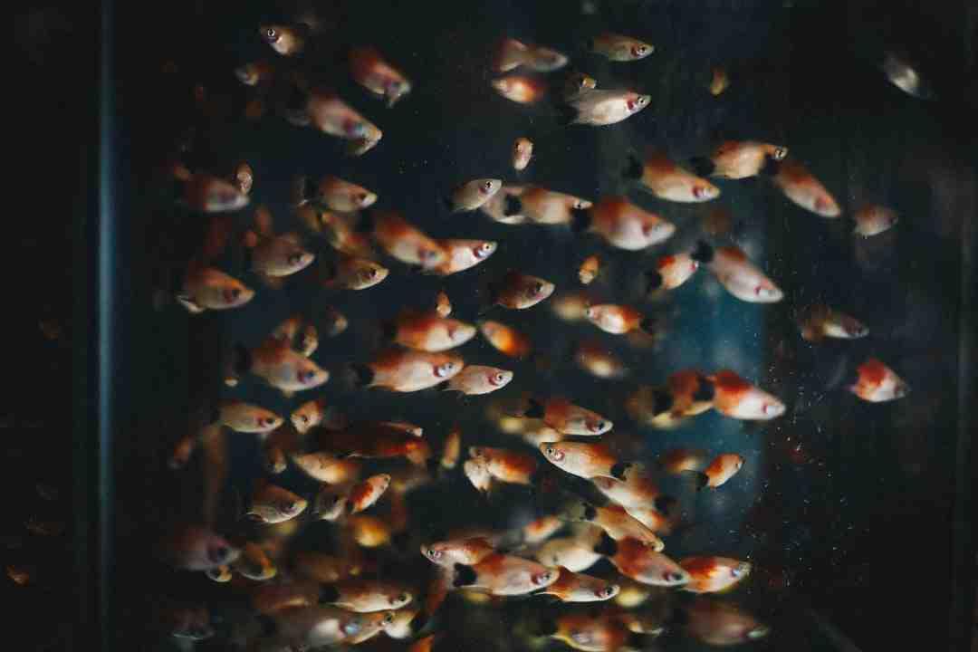 Quelles sont les puissances de l'éclairage LED pour aquarium?